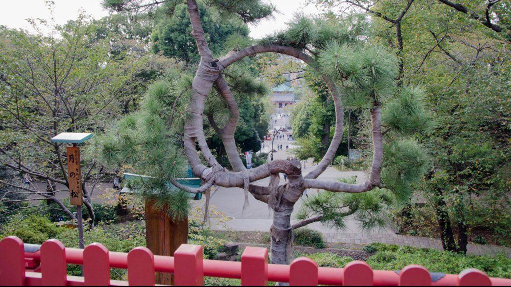 Ausblick vom Ueno-Schrein